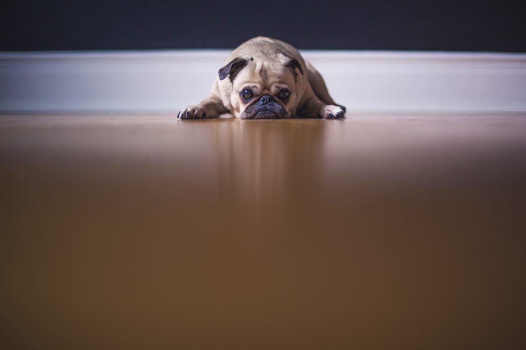 Hund am Boden